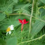"""""""red and white flower"""" by rderder"""
