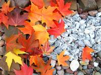 Leaves Autumn Tree Leaves art prints Rock Garden