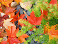 Fall Leaves Red Orange Autumn Tree leaves prints