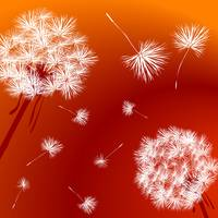 Dandelions over a bright red background