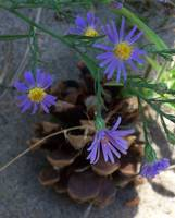 Wildflower with Pine Cone