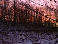 Winter Sunrise through Trees 2025