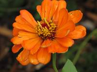 Orange Bright Flower..