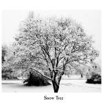 """Snow Tree"" by freneticamnesic"