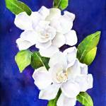 """The Fragrant Gardenia"" by awagner"