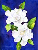 The Fragrant Gardenia