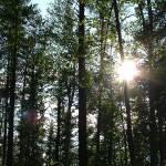 """""""Sunny Grove"""" by JRKlenPhotography"""