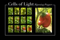Cells Of Light: Ripening Pepper
