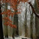 """""""Winter"""" by jeffschreier"""