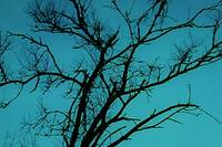 Dark Tree Skyscape