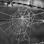 """Web and Wire"" by pennyhardiephotography"