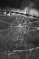 Web and Wire