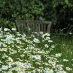 """Bench in the daisies"" by pennyhardiephotography"