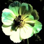 """Bumble Bee Antique"" by KarlaRickerArt"