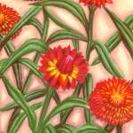 """Strawflowers"" by IndianPaintbrush"