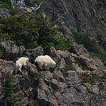 """Wildlife On The Trail To Mount Ellinor"" by markwhitesell"