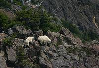 Wildlife On The Trail To Mount Ellinor