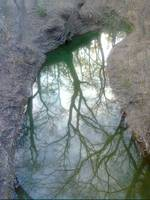 Trees Reflected in Creek