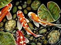 Pebbles And Koi