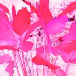 """My Pink Garden"" by Debrene"