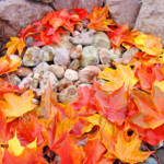 """Leaves art prints Colorful Autumn Leaf Rock Garden"" by BasleeTroutman"