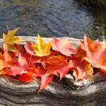 """""""Leaves art prints Autumn Tree Leaves Water Wood"""" by BasleeTroutman"""