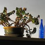 """Blue Bottles and Succulent"" by garthglazier"