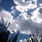 """""""Summer Skies"""" by theeleganthedgehog"""