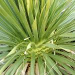 """""""agave02"""" by meganrenehoover"""