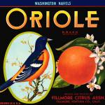 """Oriole"" by dalidayna"
