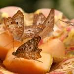 """""""butterflies"""" by markwuttke"""