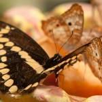"""""""butterflies-3"""" by markwuttke"""