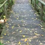 """""""Pathway"""" by katiesstudio"""