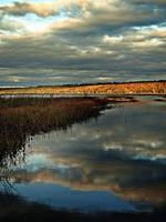 Fall Marshland In Maine
