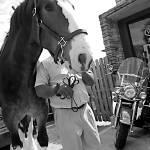 """Two Horses"" by JCPics"