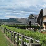 """New Zealand - Mud House Winery South Island"" by M2Mphotography"