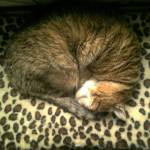 """""""Angie cat sleep in his bed..."""" by BobM"""