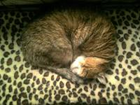 Angie cat sleep in his bed...