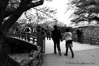 Couple Love Hirosaki Castle