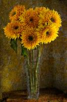 Double Sunflowers in a Glass Vase