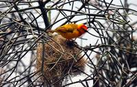Bird on Nest