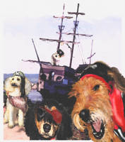 pirate dogs2