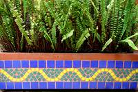 Tiles and plant