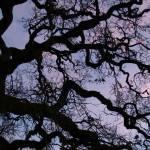 """""""OAK TREE"""" by sandradee8"""