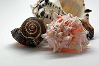 Shell Grouping