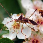 """""""Insect on a plant"""" by fecheagaray"""