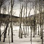 """Winter Aspens Grove"" by LanceIFitzsimmons"