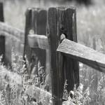 """Wooden Fence"" by LanceIFitzsimmons"