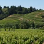 """winery"" by sandradee8"