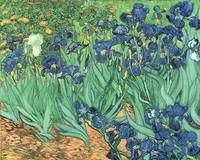 Irises, 1889 (oil on canvas) by Vincent van Gogh